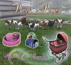 JIAN Posh Pups :: The Gacha Garden ([JIAN]) Tags: pet pets chihuahua cute puppy pups puppies mesh ad adorable secondlife kawaii jian companions gacha kaliafirelyte gachakey