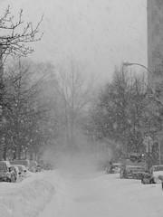 Winter Storm Jonas (Sammy!) Tags: nyc blackandwhite brooklyn poor snowstorm january blizzard visibility 2016 blizzardjonas