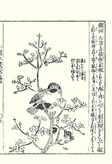 Wintersweet and blue-crowned hanging-parrot (Japanese Flower and Bird Art) Tags: flower bird art japan japanese book picture kano woodblock chimonanthus tachibana wintersweet bluecrowned calycanthaceae psittacidae praecox loriculus galgulus hangingparrot morikuni readercollection