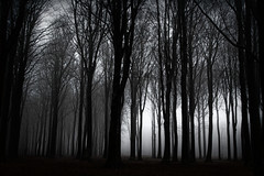 50 shades (Threin Ottossen) Tags: wood blackandwhite black nature forest landscape denmark shadows outdoor serene lolland abigfave innamoramento earthnaturelife vindeholme
