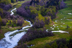 Meandering streams (GeorgeOfTheGorge) Tags: green oregon april dappled vistahouse meandering dappledlight columbiagorgenationalscenicarea