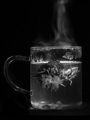 Chinese Tea Blossom - mono.jpg (Kinesthesis) Tags: green cup glass tea blossom beverage chinese steam mug condensation marigold