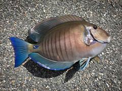 Fish For The  Day (Denzil D) Tags: fishing florida floridakeys saltwater wifephoto oceanfishing appleiphone iphonephoto bridgefishing