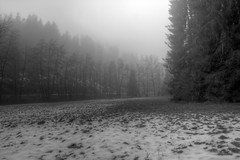 Nebel an der Steina