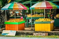 (#27) Roadside Citrus in Tampa (xTexAnne) Tags: fruit umbrella florida citrus roadside fruitstand fromthepassengerseat nikond7100 diannewhite 116picturesin2016