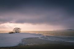 Bodensee und Insel Lindau (L.u.n.e.x.) Tags: schnee winter light lake snow tree clouds germany landscape licht wolken lindau insel bodensee landschaft baum lakeconstance sel18200 sonynexf3