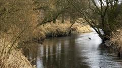 2016-02-12_07-15-41 (wiktor_furmaniak) Tags: nature river landscape sony 85mm poland samyang watercollection diamondclassphotographer allnaturesparadise alpha65