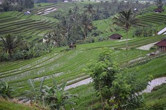 Jatiluwih ricefields (Andreas' Photos) Tags: bali ricefields jatiluwih