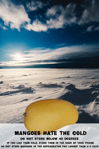 """Mangoes Hate the Cold • <a style=""""font-size:0.8em;"""" href=""""http://www.flickr.com/photos/139081453@N03/25169886383/"""" target=""""_blank"""">View on Flickr</a>"""