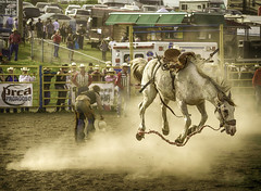 Airdrie Pro Rodeo 2013 - Airdrie, Alberta, Canada (Purvesh Trivedi -www.purveshtrivediphotography.com) Tags: wild horse canada calgary sport rural cowboy alberta pro rodeo stampede airdrie 2013