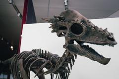 Jurassic Park -  Pachycephalosaurus (Mallika Makkar Photography) Tags: toronto canada history museum canon fossil rebel university dinosaur reptile wideangle science bones bone biology paleo rom palaeontology yyz uoft 18mm fossilized sauropod 416 pterosaur torontophotographer torontophotography