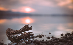 csak egy partra vetett fa (Marcell Faber) Tags: wood sunset sun lake water mood excapture