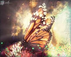 'A butterfly's Life' #Photography #PhotoManipulated #GraphicDesign #DigitalArt #Art #artist #butterfly #Nature #magic #Surreal #UsagigunnDesignInx #SarahsArt #SarahMaurer #illustrator #Illustration (Usagigunn79) Tags: photography photomanipulated graphicdesign digitalart art artist butterfly nature magic surreal usagigunndesigninx sarahsart sarahmaurer illustrator illustration