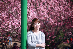 IMG_8193-P (JIMI_lin) Tags: taiwan sakura  tw