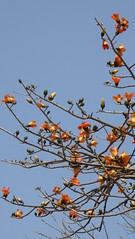 P1050295 (Big Tree Chen) Tags: