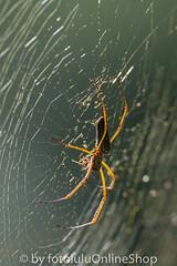 Argentinien_Insekten-89 (fotolulu2012) Tags: tierfoto