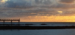 Starlings at Sunset (DMLewis1960) Tags: sunset sea pier aberystwyth ceredigion starlings murmuration