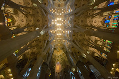 Ceiling of Sagrada Famlia  (Ming_Young) Tags: barcelona travel architecture ceiling gaudi sagradafamilia   sagradafamlia