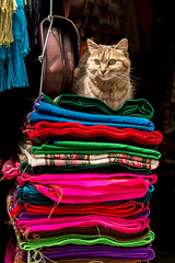 King cat (yoskinomura) Tags: wool alpaca colors comfortable cat market bolivia resting scarves blankets