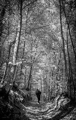 L'etereo_frusciare (Danilo Mazzanti) Tags: blackandwhite alberi photography foto photos fotografia sentiero luce biancoenero fotografo danilo bosco mazzanti danilomazzanti wwwdanilomazzantiit