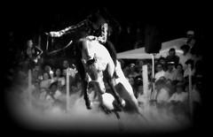 Dom Pedrito (Eduardo Amorim) Tags: brazil horses horse southamerica brasil criollo caballo cheval caballos cavalos pferde cavalli cavallo cavalo gauchos pferd riograndedosul pampa hest hevonen campanha brsil chevaux gaucho  amricadosul fronteira hst gacho  amriquedusud  gachos  sudamrica suramrica amricadelsur  sdamerika crioulo caballoscriollos criollos jineteada   americadelsud gineteada dompedrito  crioulos cavalocrioulo americameridionale caballocriollo eduardoamorim cavaloscrioulos