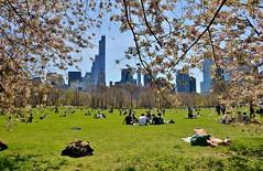 Central Park-Sheep Meadow, 04.16.16 (gigi_nyc) Tags: nyc newyorkcity spring centralpark sheepmeadow springincentralpark