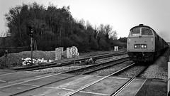 Maybach Noir (J @BRX) Tags: yorkie train yorkshire locomotive railtour maybach mainline d1015 dieselhydraulic class52 westernchampion southmilford westernfirebrand brmaroon april2016 gascoignewoodjunction themaybachyorky