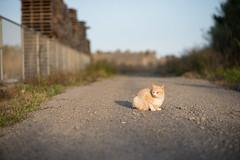 (23fumi) Tags: cat nikon dof bokeh 85mm   d600  afs85mmf18g