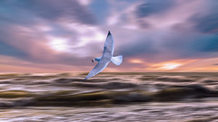 Pche (Amanclos) Tags: sea wallpaper sky seascape water canon waves ciel couleur seabird mouette waterscape goland seagall canonphotography canoneos5dmarkiii
