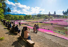 LHM_0174 (Leo Hartadi) Tags: park nature japan landscape saitama chichibu seibu