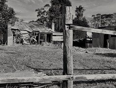 the back side, HFF! (HOLLY HOP) Tags: bw abandoned monochrome fence outdoors decay dry australia victoria woodenfence derelict ruraldecay fencepost drygrass hff gardenfence centralvictoria tarnagulla fencefriday