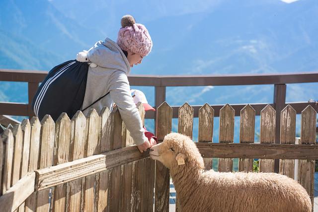 戶外親子攝影,全家福攝影推薦,兒童親子寫真,兒童攝影,南投清境攝影,紅帽子工作室,婚攝紅帽子,清境小瑞士攝影,清境農場親子,清境農場攝影,親子寫真,親子攝影,familyportraits,Redcap-Studio-74
