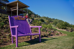 ? (Tatters ) Tags: garden bench purple australia queensland huge maleny oloneo