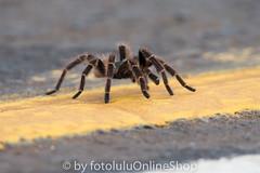 Argentinien_Insekten-50 (fotolulu2012) Tags: tierfoto