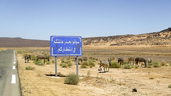 Une famille en or   (habib kaki 2) Tags: 3 sahara algeria el algerie rn  tassili ne   djanet  bordj rn3 illizi     haouas