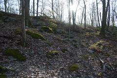 P1220065 (WhatsAllThisThen) Tags: trees nature forest woods hiking bearmountain