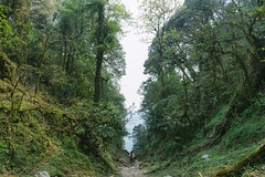 Fairy tale pathway through the Annapurna hills of Nepal (SamKent22) Tags: nepal mountains nature fairytale forest trekking walking outdoors track hiking exploring scenic hills adventure jungle greenery lordoftherings annapurna pathway secluded poonhilltrek