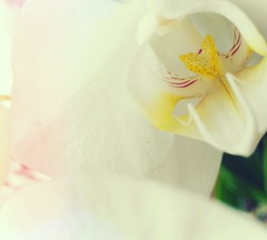 Look over your eyes (sweetylane) Tags: plants orchid flower macro green beautiful eyes petal occhi fiore piante effect petali orchidea macronature floreale