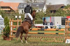 DSC09716_s (AndiP66) Tags: horse sports sport schweiz switzerland sony luzern september gelb bern alpha concours pferd equestrian ch horsejumping wettbewerb 2016 springen f456 hindelbank kantonbern pferdesport sonyalpha springreiten cantonberne jegenstorf wolhusen andreaspeters jegensdorf pferdespringen grueb sony70400mm martinameyer 77m2 sal70400g2 sony70400mmf456gssmii a77ii ilca77m2 77ii 77markii slta77ii 23april2016
