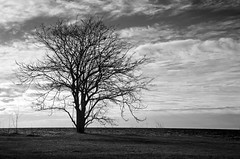 I Stand Alone DSL7691.Explored (iloleo) Tags: park morning bw toronto tree nature clouds landscape lakeontario ashbridges nikond7000