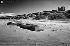 Log on the Beach, Castle Bamburgh, Northumberland (Silent Eagle  Photography) Tags: wood sea bw plants seascape tree castle beach monochrome canon photography yahoo google log silent eagle outdoor sep bamburgh bamburghcastle canoneos5dmarkiii logonthebeach silenteaglephotography silenteagle09
