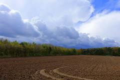 Het kan weer gaan groeien/It can grow again (truus1949) Tags: bomen wandelen natuur wolken lente limburg landschap