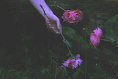 (Dangerous...Dan) Tags: pink flowers people plants cold green floral leaves forest dark death stem hand fingers creepy explore mysterious peonies