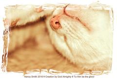 Ashlie (NancySmith133) Tags: cats pets kittens ki kittycats petportraits catportraits belovedpets householdpets