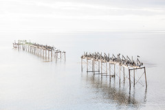 Bird Covered Dock in Punta Arenas, Patagonia, Chile (ChrisGoldNY) Tags: chile patagonia reflection latinamerica southamerica water birds docks reflections forsale albumcover bookcover bookcovers albumcovers licensing magallanes chilean puntaarenas thechallengefactory magallanesprovince chrisgoldny chrisgoldberg chrisgoldphoto