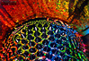 Ferrofluid Rainbow (RichardBeech) Tags: abstract colour macro closeup canon studio spiky rainbow paint arty patterns experiment sigma science nasa messy colourful magnet spikes magnetic scientific ferromagnetic ferrofluid sigma15028macrolens richardbeech
