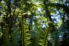 NZ Nelson Ferns DSC05388-15 (jasonclarkphotography) Tags: newzealand christchurch sony tasman nex nelsonlakesnationalpark canterburynz lakerotoroa nex5 jasonclarkphotography