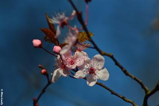 9440- Prémices du printemps... :)