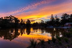 Surrey Park Sunset - 5 (djryan78) Tags: trees sunset summer sky cloud lake colour reflection building tree water clouds canon landscape duck outdoor dusk ducks australia melbourne victoria shore dslr 1740 boxhill 6d 1740l surreyhills surreypark canon6d surreyparklake