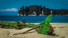 NZ Beach (c_b_s_2) Tags: park new wood trees sea fern beach water island log sand south zealand national nz abel tasman